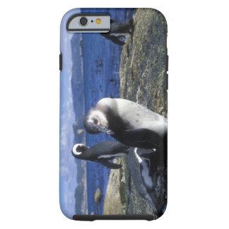South Africa, Simon's Town, Jackass Penguin Tough iPhone 6 Case