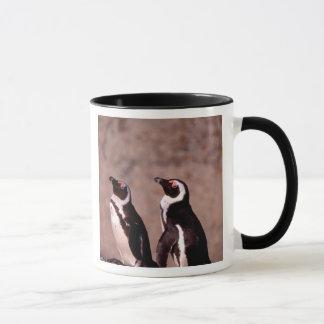 South Africa, Simons Town. Jackass Penguins 2 Mug