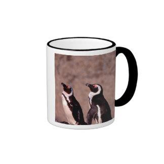 South Africa, Simons Town. Jackass Penguins 2 Coffee Mugs