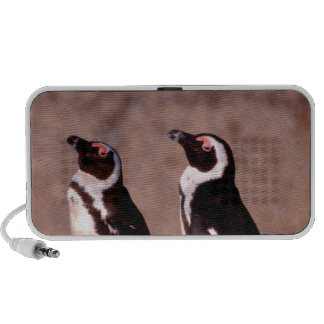 South Africa, Simons Town. Jackass Penguins 2 Notebook Speakers