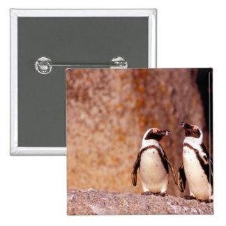 South Africa, Simons Town. Jackass Penguins 3 2 Inch Square Button