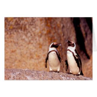 South Africa, Simons Town. Jackass Penguins 3 Card