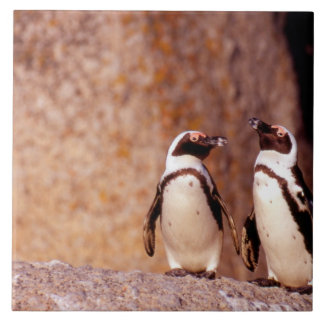South Africa, Simons Town. Jackass Penguins 3 Ceramic Tile