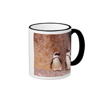 South Africa, Simons Town. Jackass Penguins 3 Coffee Mugs