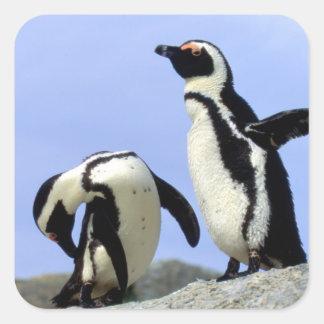 South Africa, Simons Town. Jackass Penguins Sticker