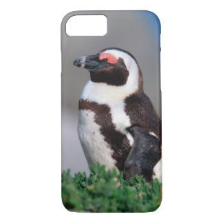 South Africa, Simons Town. Sleeping Jackass iPhone 8/7 Case