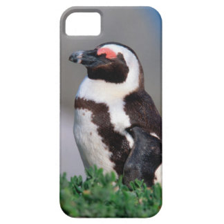 South Africa, Simons Town. Sleeping Jackass iPhone SE/5/5s Case