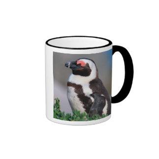 South Africa, Simons Town. Sleeping Jackass Coffee Mug