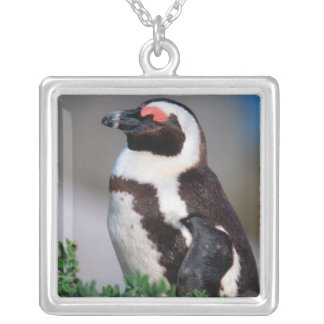 South Africa, Simons Town. Sleeping Jackass Silver Plated Necklace