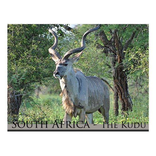 South Africa - the Kudu Postcard