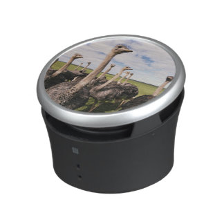 South Africa, View of ostrich Bluetooth Speaker