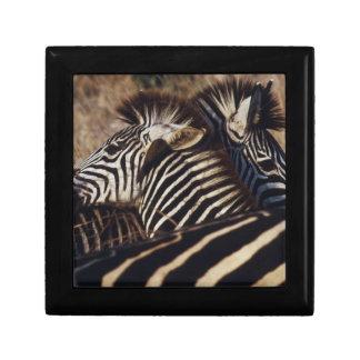 South Africa, View of Zebra (Equus Burchellii) Keepsake Box