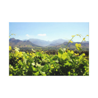 South Africa Vineyard and Wine Canvas Print