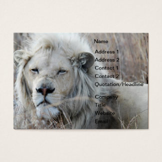 South Africa White Lion resting Business Card