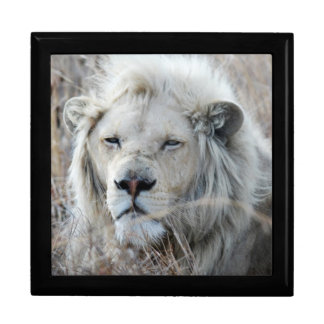South Africa White Lion resting Keepsake Box