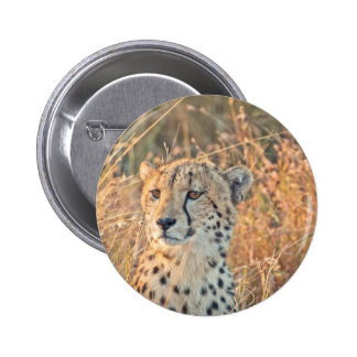 South African Cheetah searches for food Buttons