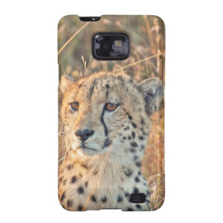 South African Cheetah searches for food Samsung Galaxy SII Covers