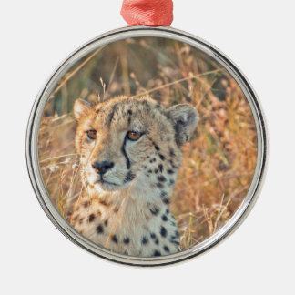 South African Cheetah searches for food Silver-Colored Round Decoration