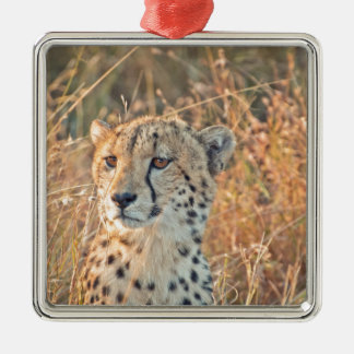 South African Cheetah searches for food Silver-Colored Square Decoration