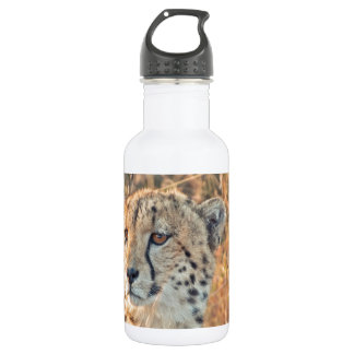 South African Cheetah searches for food 18oz Water Bottle