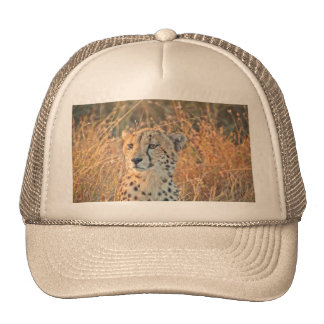 South African Cheetah searches for food Trucker Hat