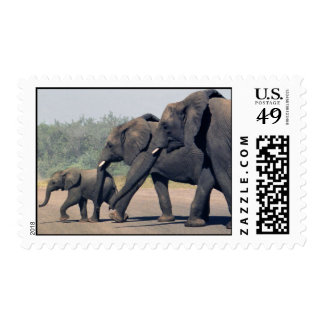 South African Elephants (medium) Stamp