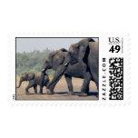 South African Elephants (medium) Stamp