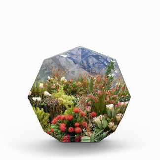 South African floral display of wildflowers Acrylic Award