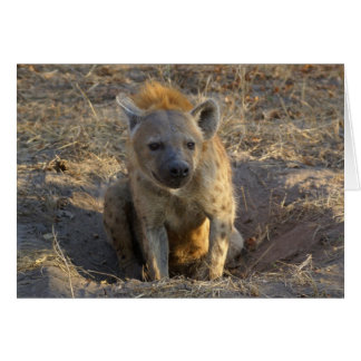 South African Hyena Card