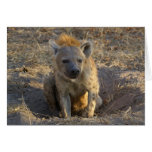 South African Hyena Greeting Card
