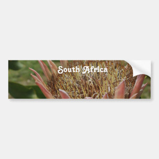 South African King Protea Bumper Sticker