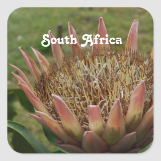 South African King Protea Square Sticker