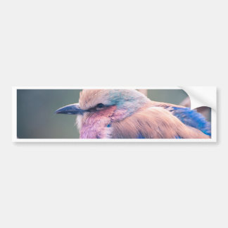 South African Lilac-Breasted Roller Bumper Sticker