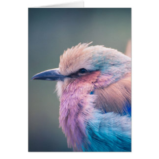 South African Lilac-Breasted Roller Card