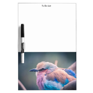 South African Lilac-Breasted Roller Dry Erase White Board
