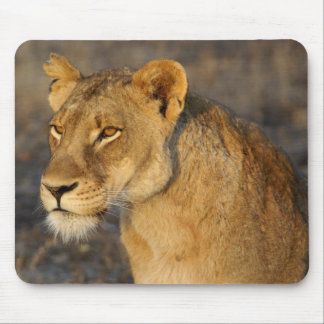 South African Lion Mouse Pad