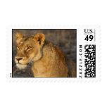 South African Lion Postage