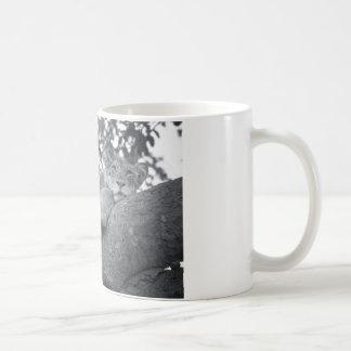 South African resting lion Coffee Mug