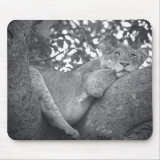 South African resting lion Mouse Pad