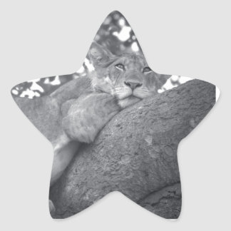 South African resting lion Star Sticker