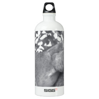 South African resting lion Water Bottle