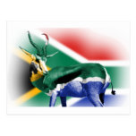South African Springbock Flag Post Card