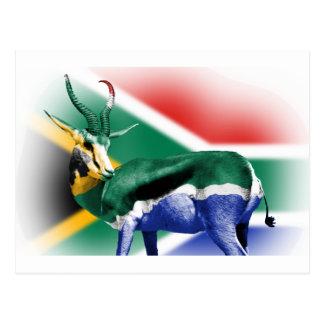 South African Springbock Flag Postcard
