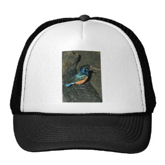 South African starling Trucker Hat