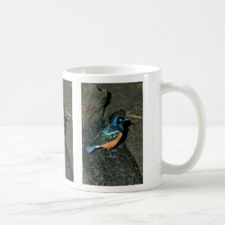 South African starling Coffee Mug