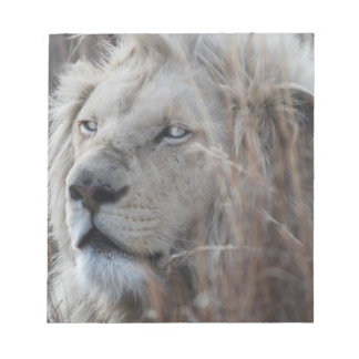 South African White Lion close up Notepad