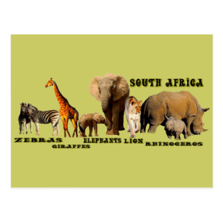 South African Wildlife Collage Postcard
