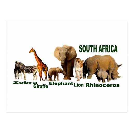 South African Wildlife Post Card
