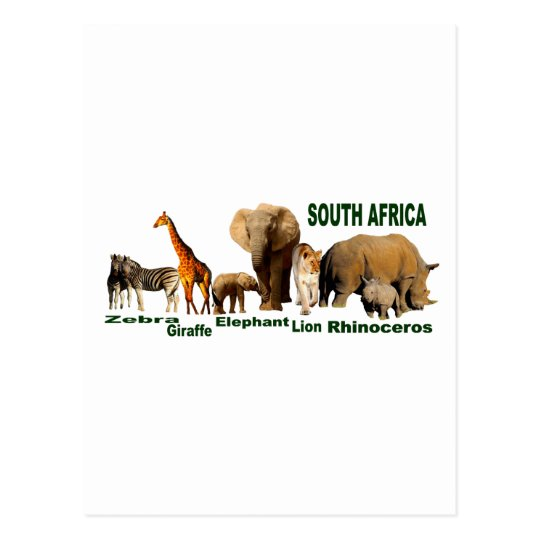 South African Wildlife Postcard