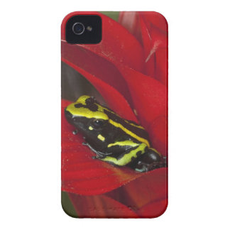 South America, Amazon Basin. Close-up of iPhone 4 Cover
